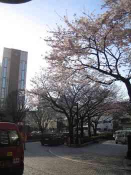 02桜(北区役所).jpg