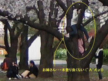 07桜.jpg