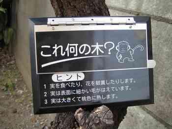 13これ何の木(質問).jpg