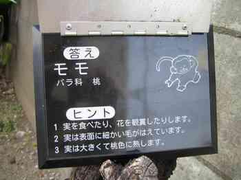 14これ何の木(答え).jpg