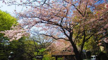 t_05)otonashi_4018.jpg