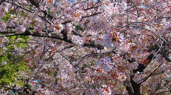 t_08)otonashi_4026.jpg
