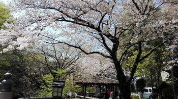 t_10)otonashi_20180331_110939.jpg