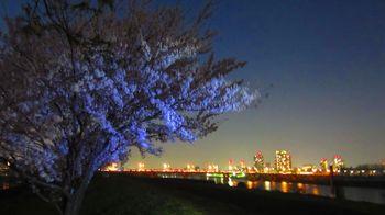 t_arakawa_sakura2018=04=.jpg