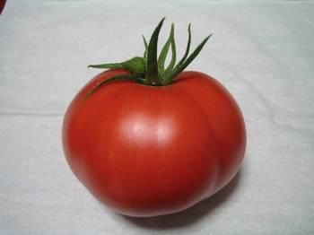 トマト02.jpg