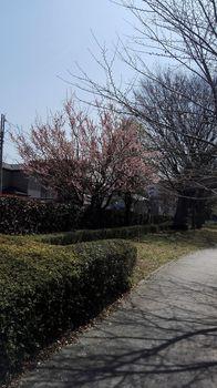 t_02)tokyo_kitairyo_20180314_120504.jpg